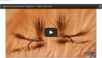 Montage mouche : L'atout chevreuil